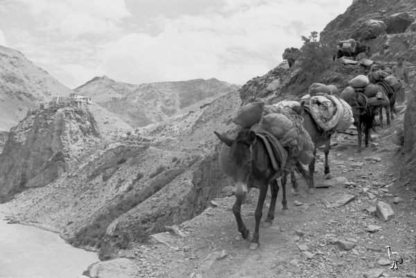Pack Horses On Hemis Trail Jpg