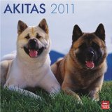 Akitas 2011 Square 12X12 Wall Calendar (Multilingual Edition)